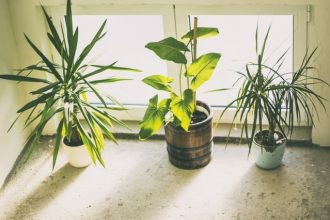 Bugs on Houseplants Home Remedies