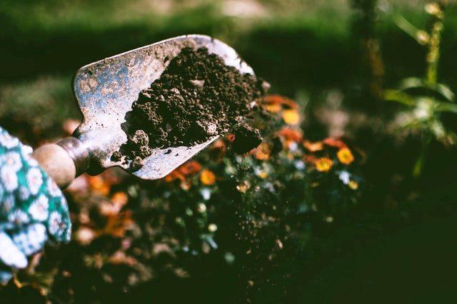 Gardening while pregnant